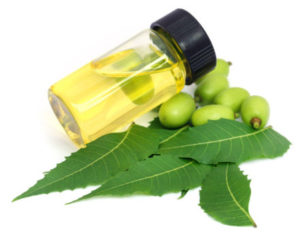 neem leaves an essential oil