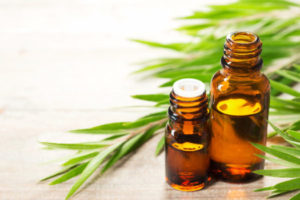 tea tree leaves an essential oil